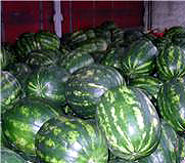 fresh-watermelons